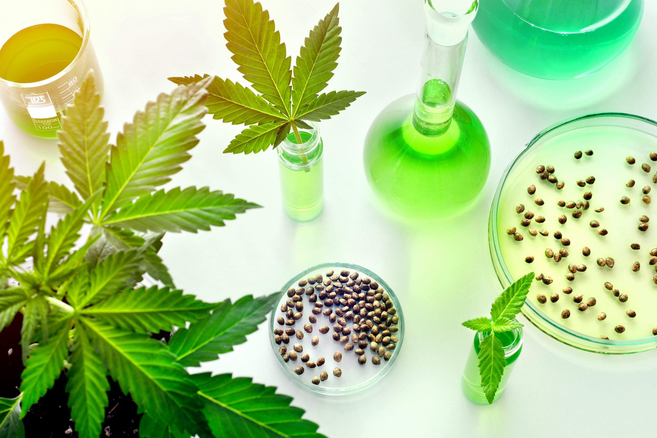 Pour l'industrie du Cannabis